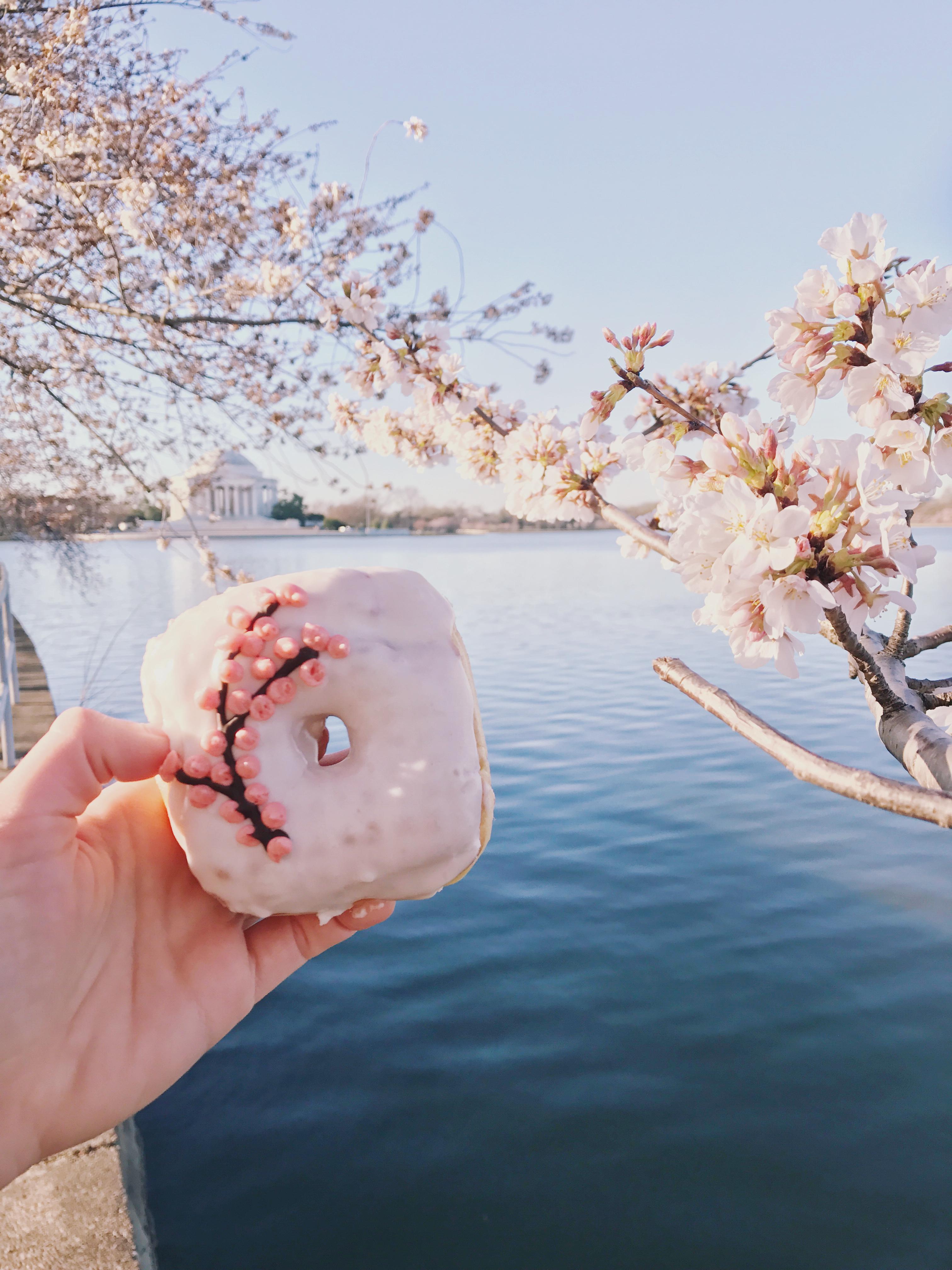 5 Instagram Worthy Locations in Washington D.C. - The Tidal Basin during Peak Cherry Blossom Season